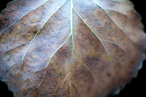 Leaf - Canon 100L 100mm prime photography lens - The Camera Life Magazine